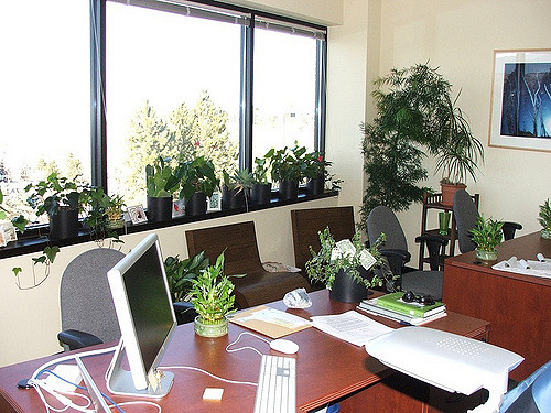 A green office has both health and productivity benefits.